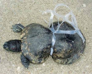 deceased-turtle-plastic-rings